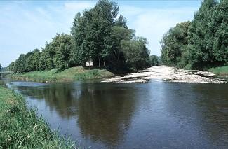 Lebendige Donau - Aktuelles
